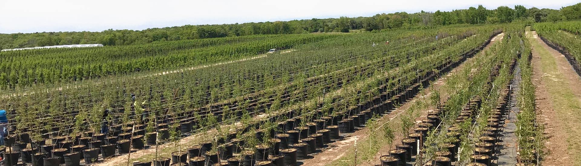 Athens Tree Farm - East Texas